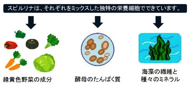 スピルリナの独特の栄養細胞