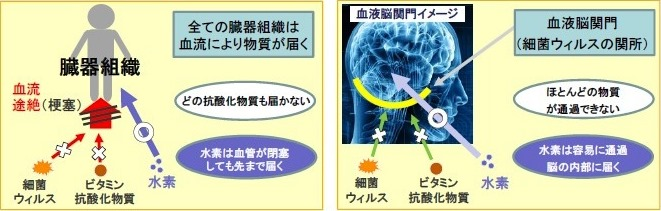 活性酸素の除去2